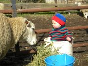 Isla-&-Sheep-045