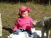 Isla-&-Sheep-051