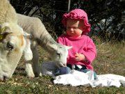 Isla-&-Sheep-058