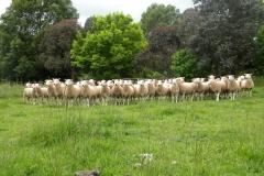 Rams-2010-069