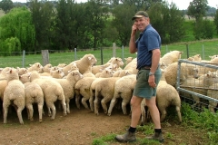 neil-smith-bareela-lambs-by-smithston-rams