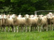 Rams-2010-054